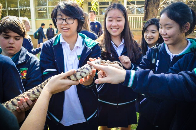 Snakes for schools